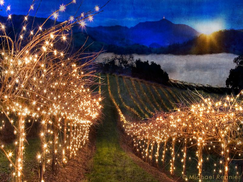 Vinography_desktop_vineyard_lights-1
